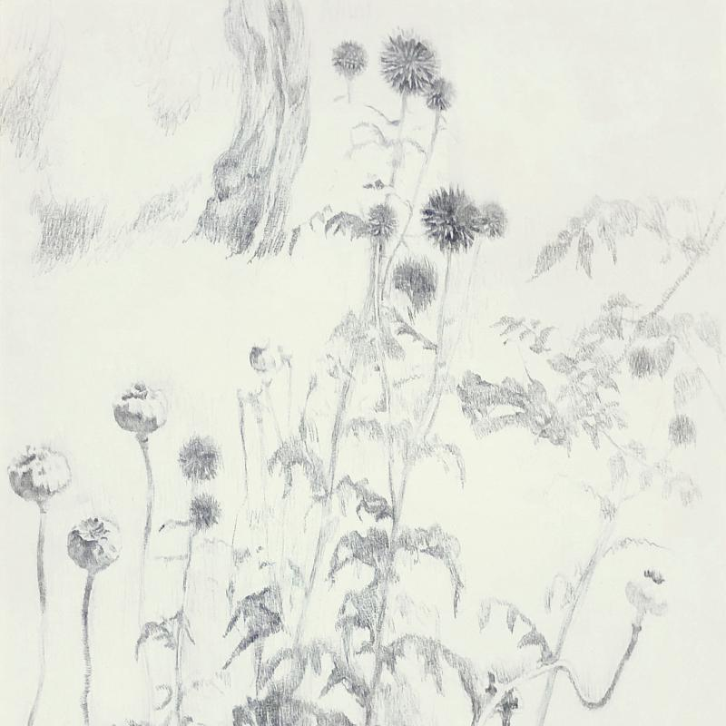Study of Flowers and Pods in the Garden at Dedham
