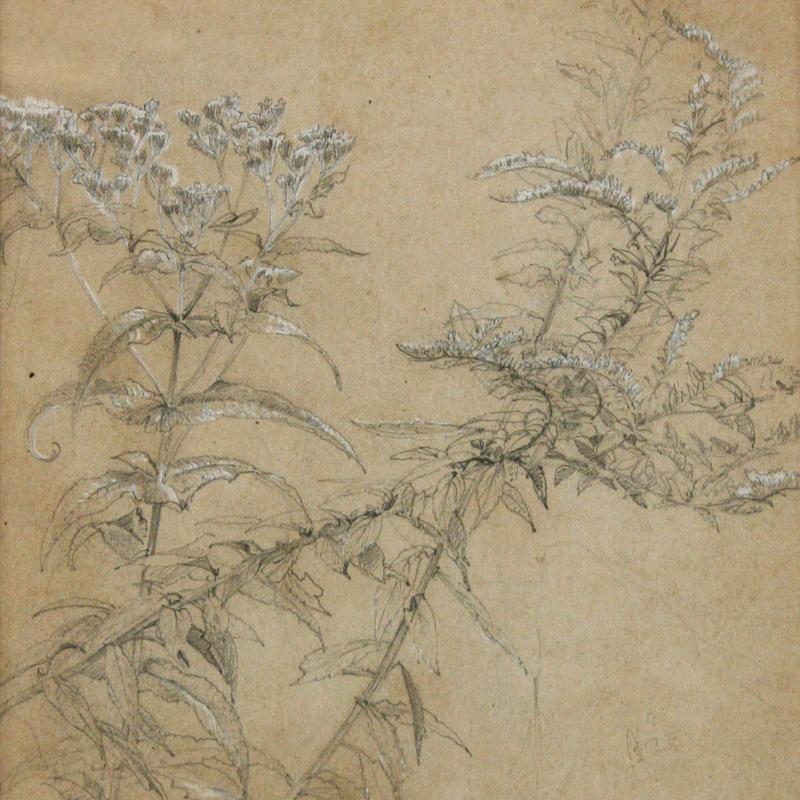 Wildflowers Study