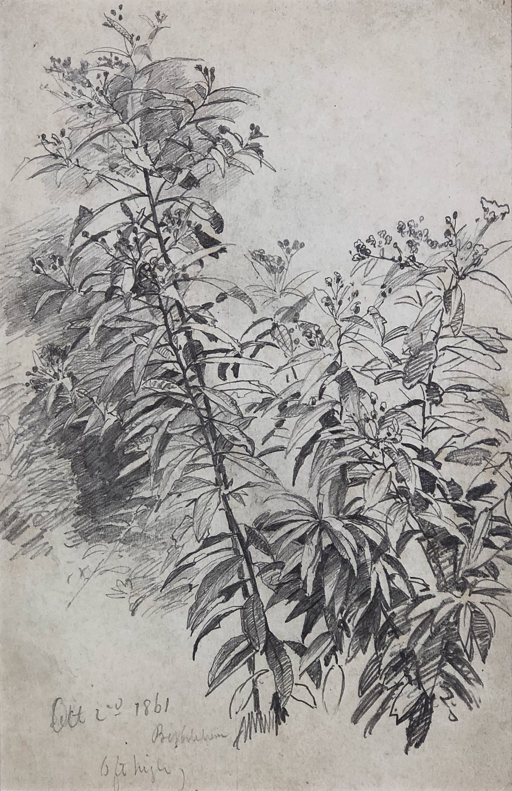 Blossoming Plant